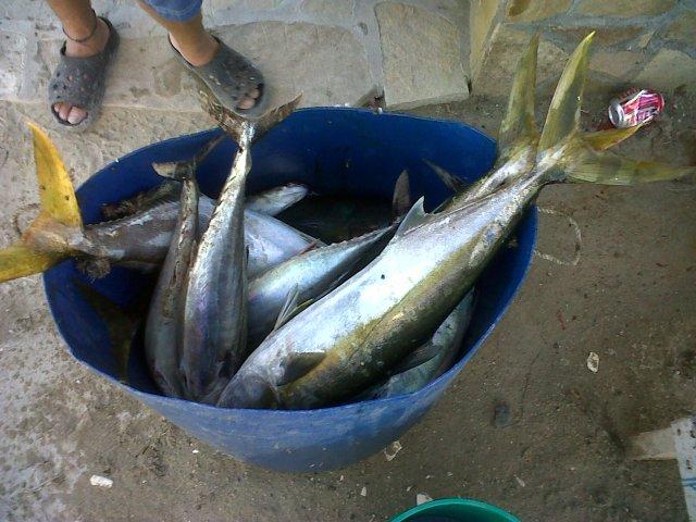 fishnabucket